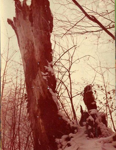 Az egykori képesfa maradványai 1984-ben