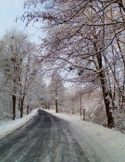 Juharfasor télen