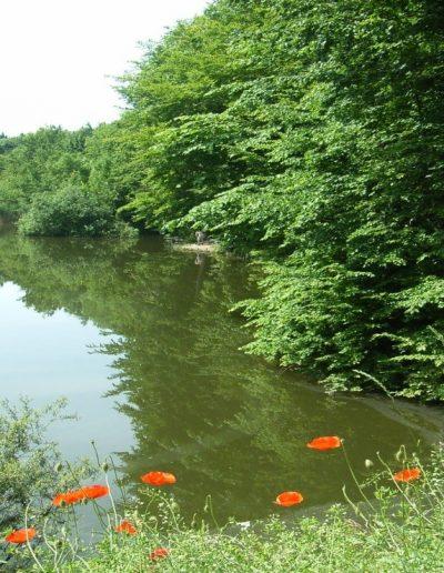 Pisztrángos-tó