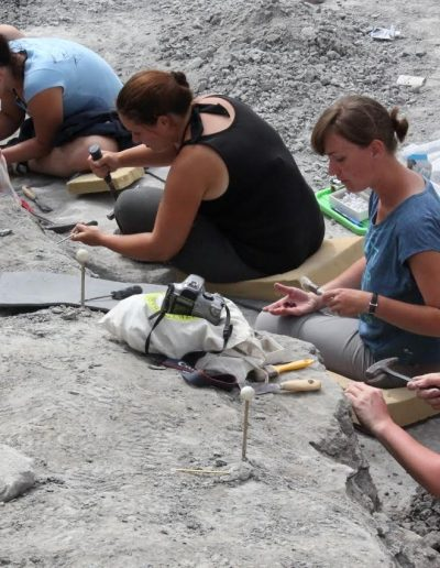 2012. 08. 03 Hungaroszaurusz Iharkút ásatás